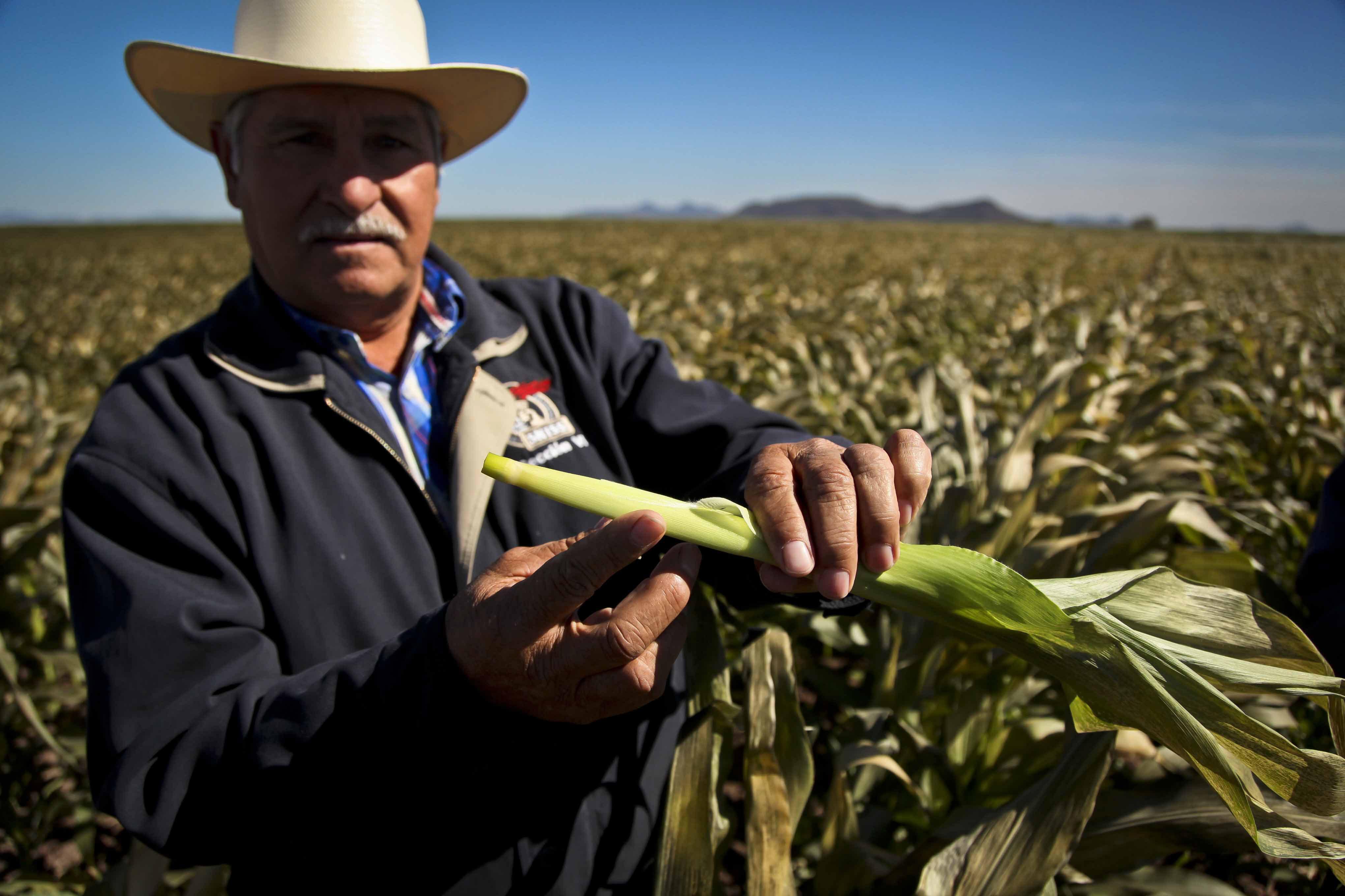 Los retos del nuevo gobierno en el campo mexicano